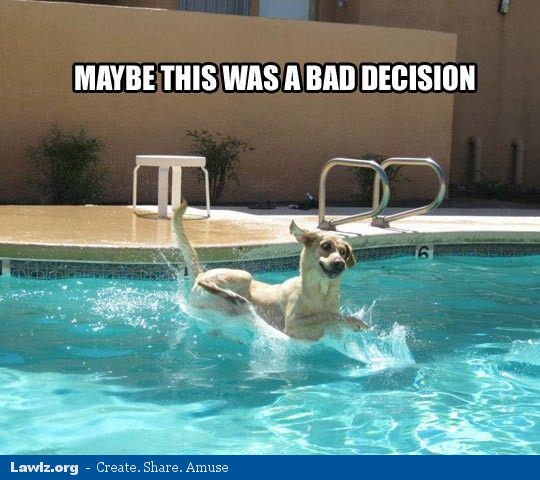 Meme Funny Dog Swimming Bing Images